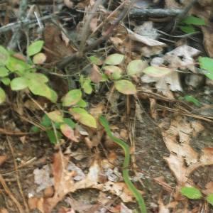 snake friend at belleplain